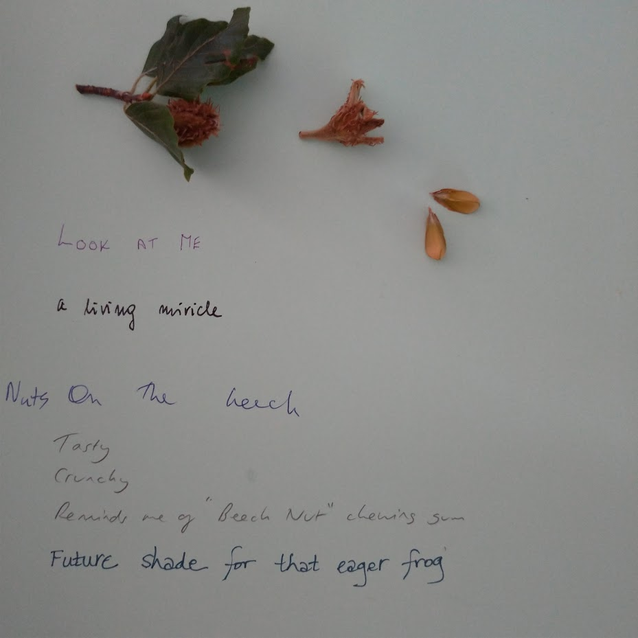 leaves, beech seeds and casing