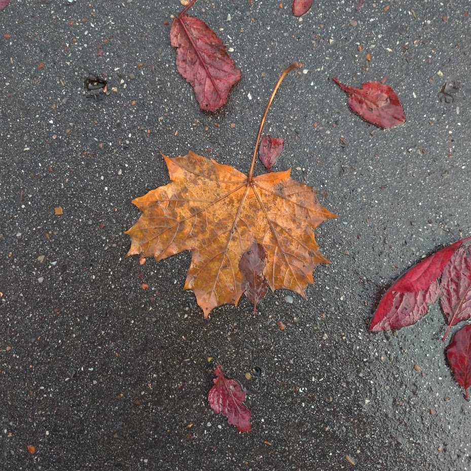 wet brown leaf on concrete