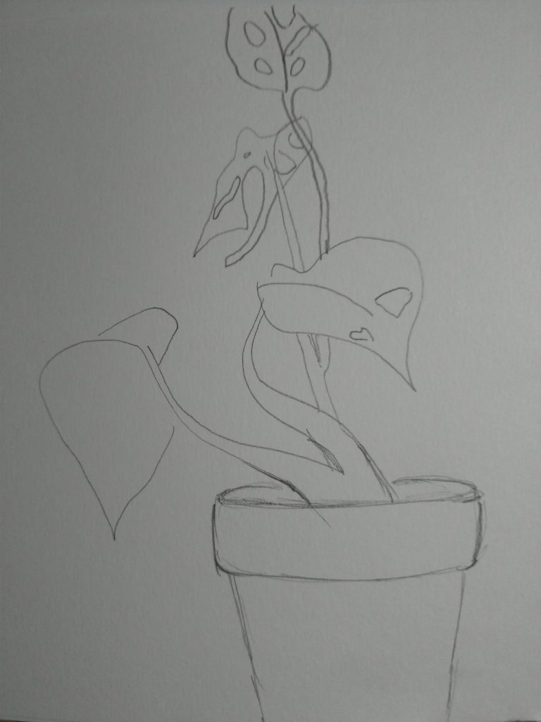 A short plant curls out of a pot, with three leaves, each bearing fenestrations (holes).