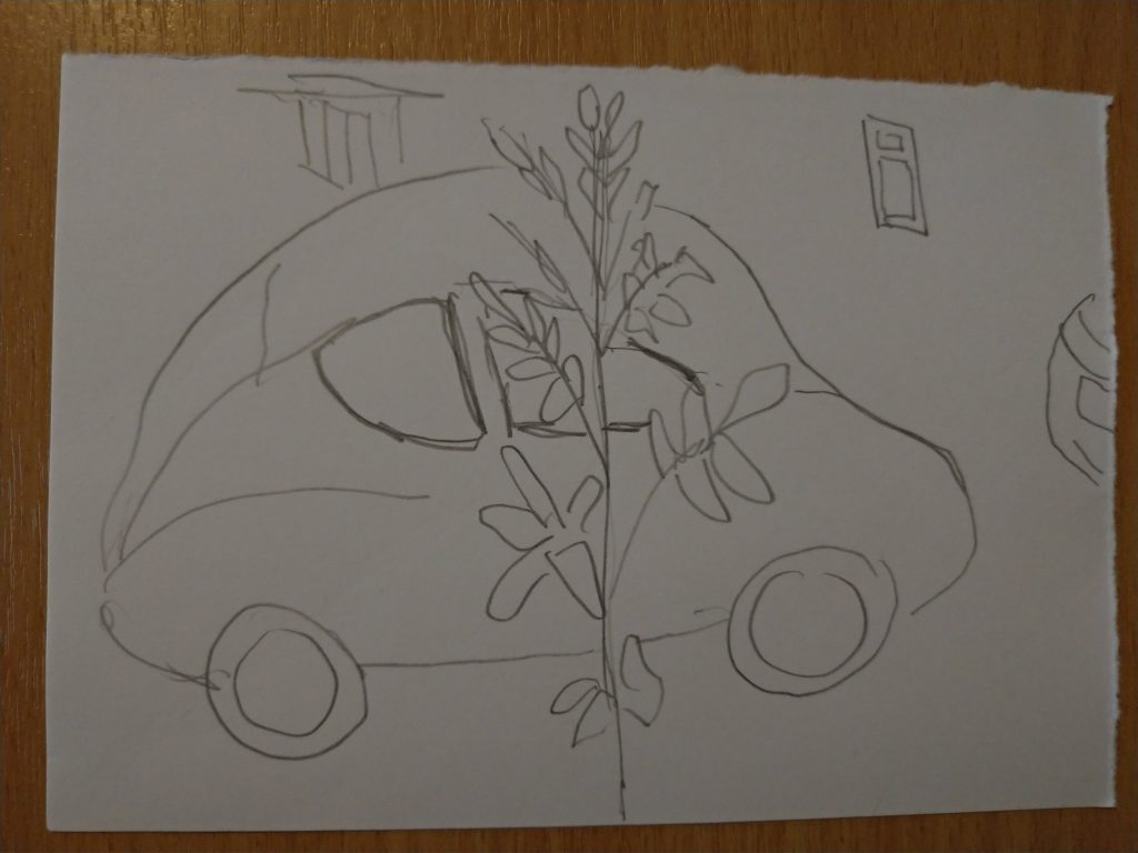 ash sapling in front of a car