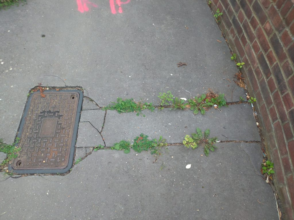 manhole near a brick wall with vegetation growing in the cracks between the two
