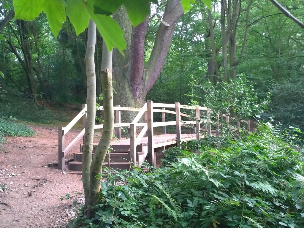 Bridge by a 150 year old cedar, with healthy vegetation in the undergrowth.