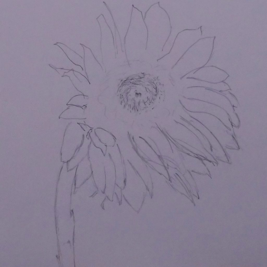 single-stemmed sunflower in 2B pencil