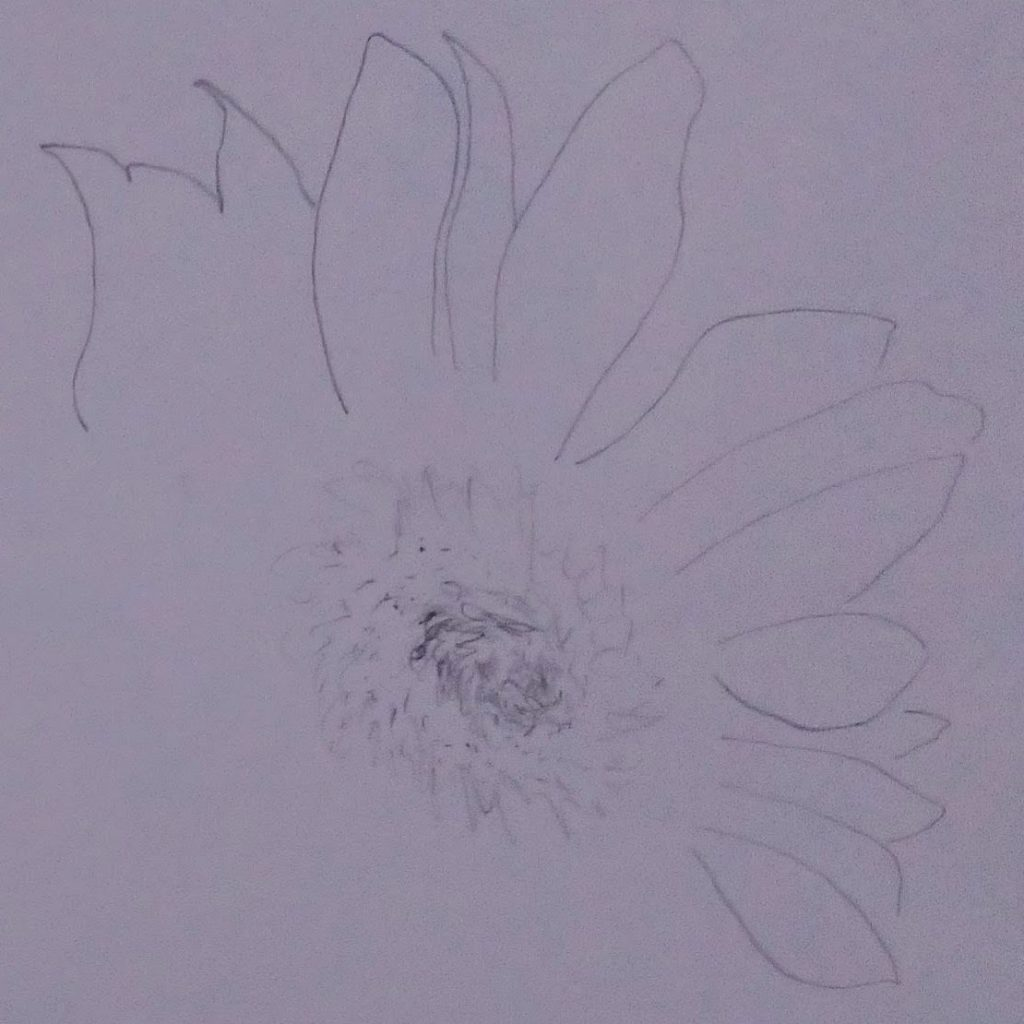 sunflower head outline incomplete in 2B pencil