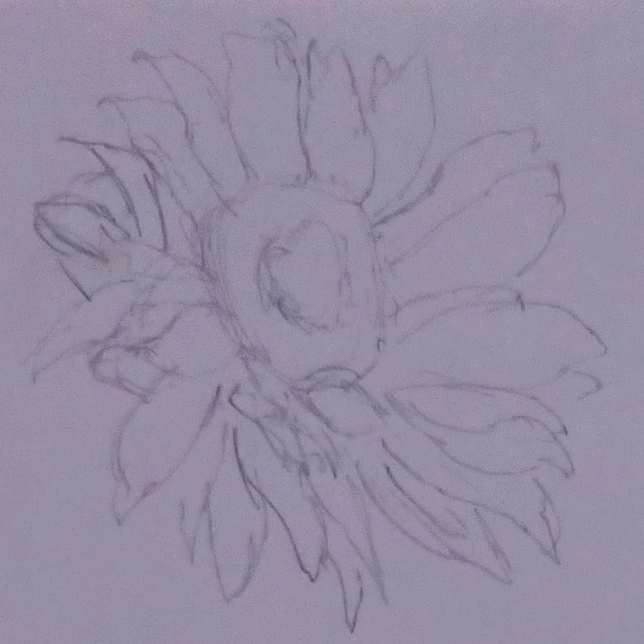 sunflower head with many petals in 2B pencil