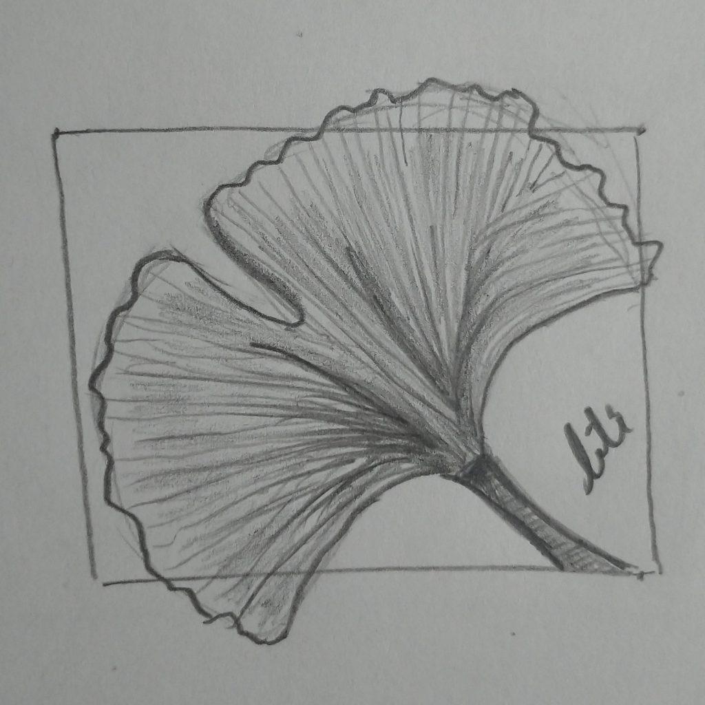a ginkgo leaf in pencil